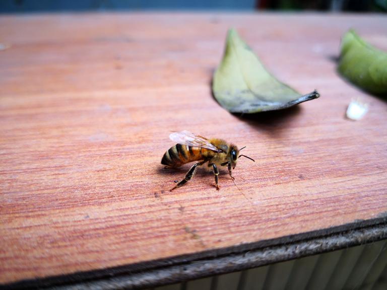 Las abejas son hermosas